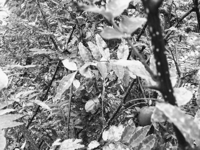 いつも見ている植物がモノクロに見えるスライド