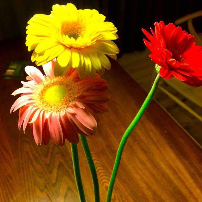 人生と似ていて、まっすぐ伸びたり、曲がったりしている花